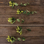 Lime green hypericum berry bulk flowers
