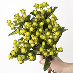 Lime green hypericum berry wholesale wedding flowers