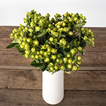 Lime green hypericum berry flowers for delivery