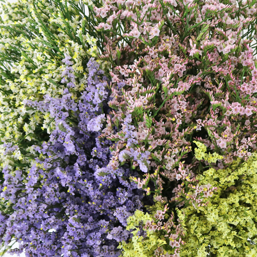 Limonium Farm Mix Flower