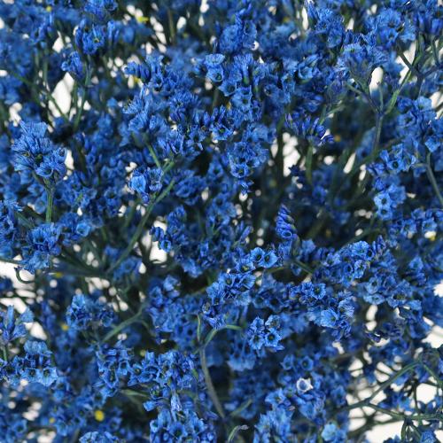Denim Blue Enhanced Limonium