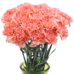 Lion King Peachy Red Carnation Flowers In a vase