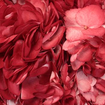 Lipstick Red Airbrushed Hydrangeas Up Close