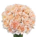 Lizzy Peachy Pink Champagne Carnation Flowers In a vase