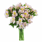 Lovely Lilac Peruvian Lily Alstromeria Flower in a Vase