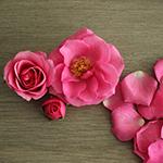 Lovely Lydia Hot Pink Spray Rose Side Stem View
