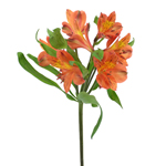 Bulk Alstromeria Barcelona flower