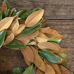 Bulk Wreath Packs Magnolia