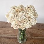 Maka Beige Carnation Flowers in a Vase