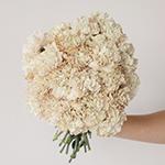 Maka Beige Carnation Flower In a hand