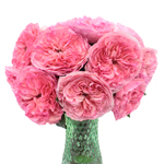 Maria Theresia Pink Garden Wholesale Roses In a vase