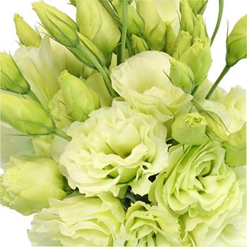 Green Designer Lisianthus Flowers