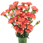 Marmalade Orange Mini Carnation Flowers In a vase