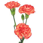 Marmalade Orange Mini Carnation Stem