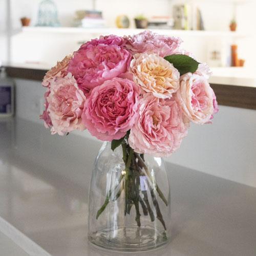 Sunset Hues Fresh Cut Pink Mayra Roses