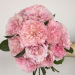 a bouquet of light pink roses to display its large blooms