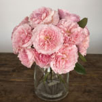 Mayra Pink Garden Wholesale Roses In a vase