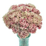 Merletto Crimson Champagne and Wine Carnation Flowers In a vase