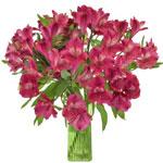 Merlot Alstroemeria Flower in a vase
