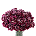 Minerva Purpleberry Carnation Flowers In a vase