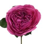 Mini Princess Pink Garden Rose Stem