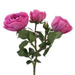 Mini Princess Pink Garden Rose Side Stem View