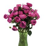 Mini Princess Pink Garden Wholesale Roses In a vase
