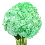 Mint Green Enhanced Hydrangea Wholesale Flowers in a Vase