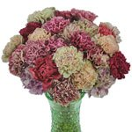 Mixed Color Vintage Carnation Flowers in a Vase