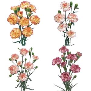 Mixed Novelties Carnation Flower FlatLay