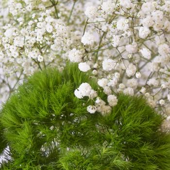 Mojito Mix DIY Flower Kit Up Close