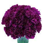Monsenor Purpleberry Carnation Flowers In a vase