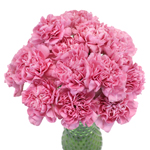 Bulk Carnation Flower Watermelon Pink