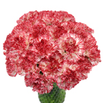 Montoya Red and White Carnation Flowers In a vase