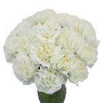 Moonlight White Carnation Flowers In a vase