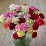 Wholesale Carnations Flower Mixed Color