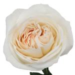 Naturally White Garden Rose Stem