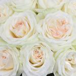 Naturally White Garden Roses up close
