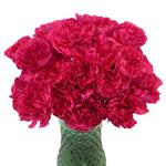 Negresco Dark Pink Carnation Flowers In a vase