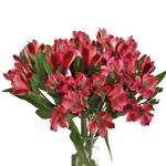 Cupido Pink alstroemeria Wholesale Flower In a vase