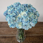 Nymp Blue and White Carnation Flowers in a Vase