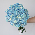 Nymp Blue and White Carnation Flower In a hand