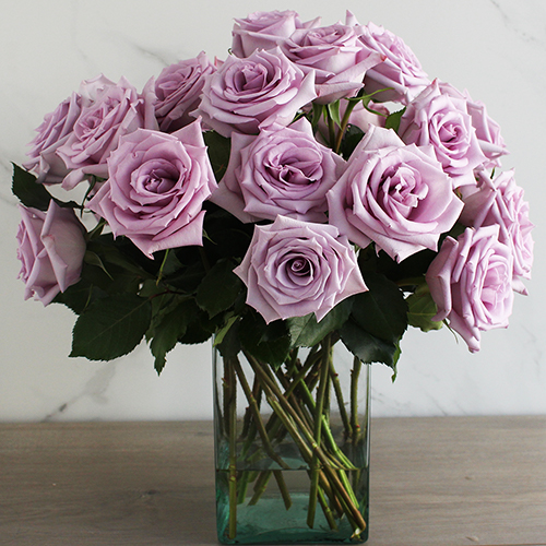 Fresh European Cut Lavender Roses For Your House