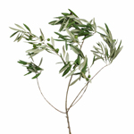 Single stem fresh cut greens olive branches wholesale sold for delivery