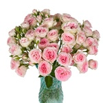 Ophilia Pink Garden Wholesale Roses In a vase
