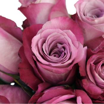 Purpleberry Fresh Cut Rose