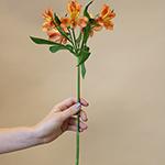 Orange alstroemeria Wholesale Flower Stem