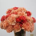 Orange Craze Carnation Flowers In a vase