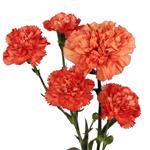 Orange Mini Carnation Flowers Stem