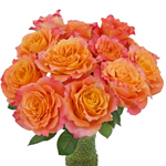 Orange Sherbet Garden Wholesale Roses In a vase